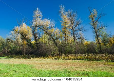 Ukrainian version of Ents trees on an autumnal meadow.