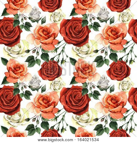 Wildflower rose flower pattren in a watercolor style isolated. Full name of the plant: rose, hulthemia, rosa. Aquarelle wild flower for background, texture, wrapper pattern, frame or border.
