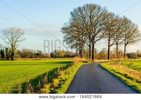 Picturesque image of bare trees against a blue sky next to a curved bitumen country road in the late afternoon of a sunny day in the beginning of the winter season.