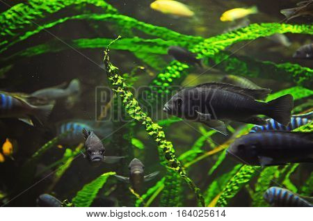 Many Gray Fish In The Aquarium