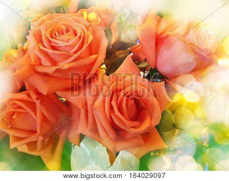 Texture Style Orange Pink Pastel Roses In Dreamy Bokeh