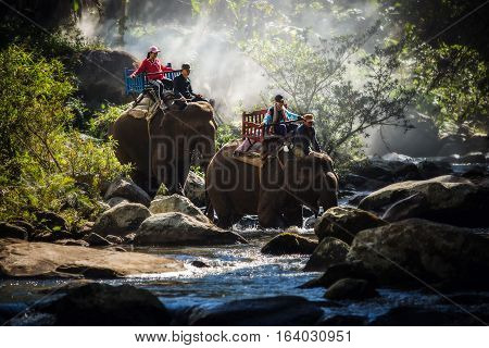 Group tourists to ride on an elephant in forest Laos.
