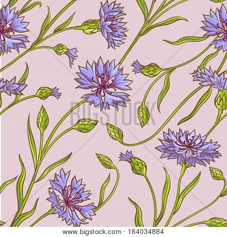 cornflower vector seamless pattern on color background