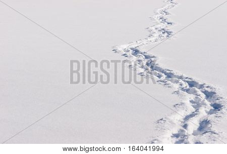 zigzag trail of footprints in the snow