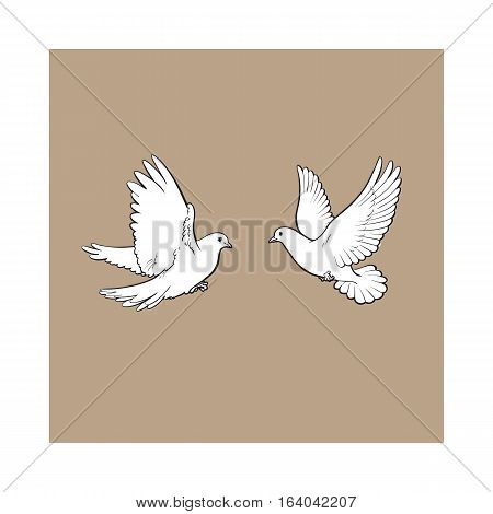 Two free flying white doves, sketch vector illustration isolated on brown background. Realistic hand drawn couple of white doves, pigeons flapping wings, symbol of love and romance, marriage icon