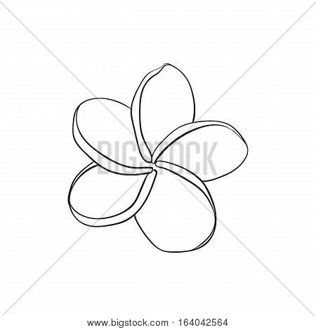 Single plumeria, frangipani tropical flower, sketch style vector illustration isolated on white background. realistic hand drawing of exotic, tropical frangipani or plumeria