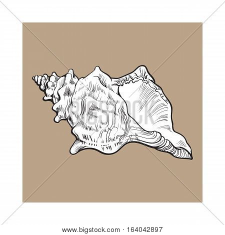 white spiral conch sea shell, sketch style vector illustration isolated on brown background. Realistic hand drawing of saltwater conch, sea snail shell