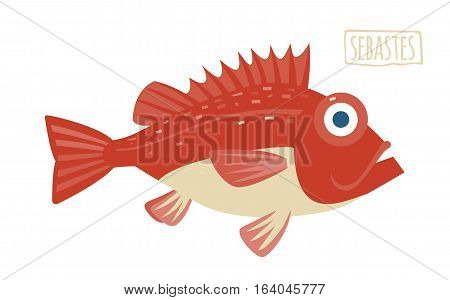 Sebastes red and beige vector illustration cartoon style
