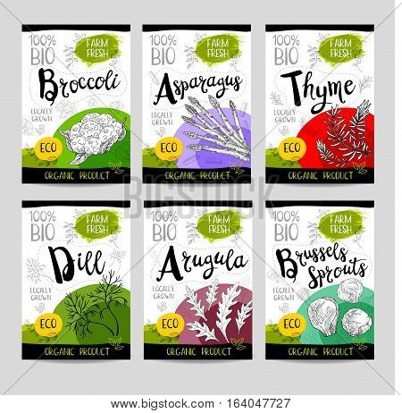 Set of colorful stickers, sketch style, food, spices. Asparagus, brussels sprouts, broccoli, thyme, arugula, dill. Vegetables, farm fresh, locally grown, organic product.