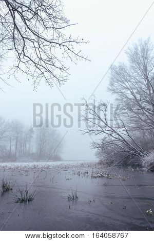 Frozen Pond In Foggy Morning