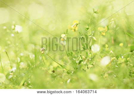 Dainty fairy flowers nature background. Tiny green floral world with sparkling dew bokeh. Soft foc