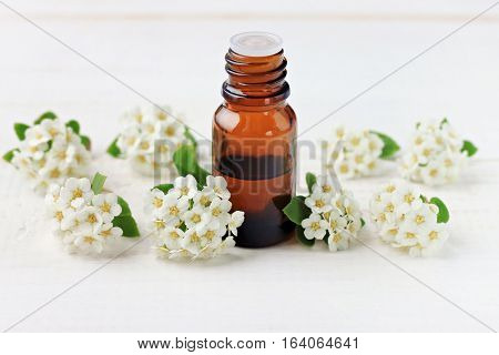 Dark glass apothecary essential oil dropper bottle amidst tender soft spring aromatic blossom, white copyscpace background. Natural remedy flower tincture.