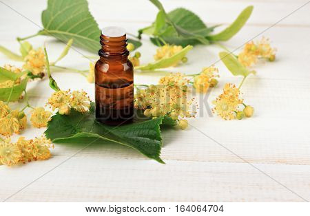 Tilia tree blossom extract in aroma bottle on leaves, fresh flowers. Health benefits of linden.