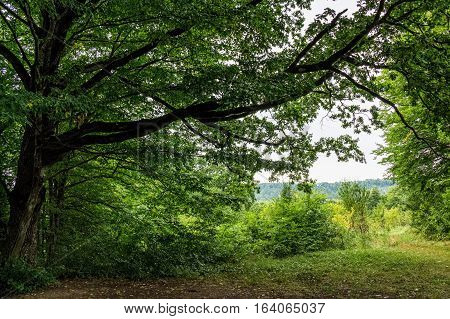 Deep in a green forest on summer day