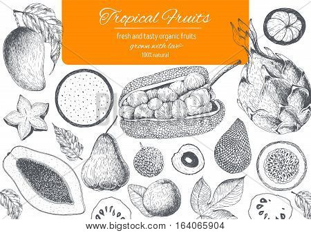 Tropical Fruits top view frame. Farmers market menu design. Healthy food poster. Vintage hand drawn sketch vector illustration. Linear graphic.