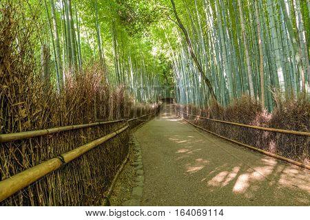 Bamboo forest in Arashiyama ( Kyoto, Japan)