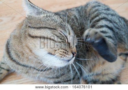 cat stevens back up singers