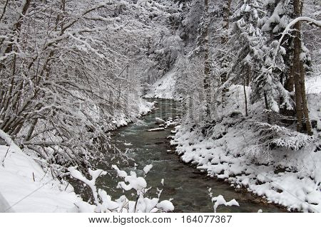 The view of cold river between the trees in winter time. Garmisch-Partenkirchen. Germany.