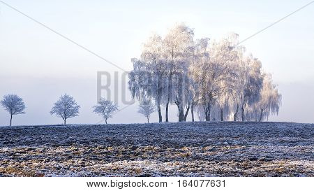 Frozen trees with rime field snow winter