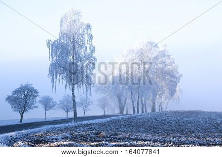 Frozen trees with rime snow winter fog