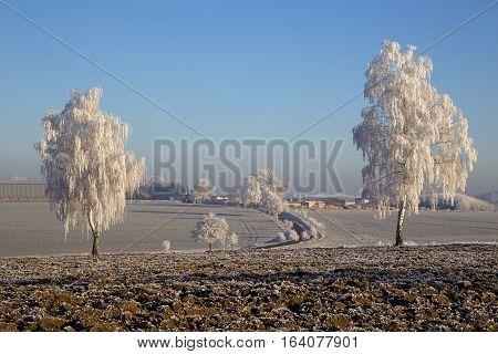 Frozen trees with rime landscape winter snow