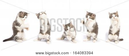 cute fluffy kitten plays on a white background. Set of kitten pictures in different poses
