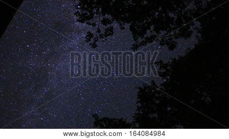 The Milky Way galaxy streaks across the sky between the treetops.