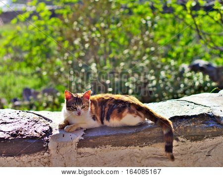 Lazy cat relaxing in sunlight on stone wall.