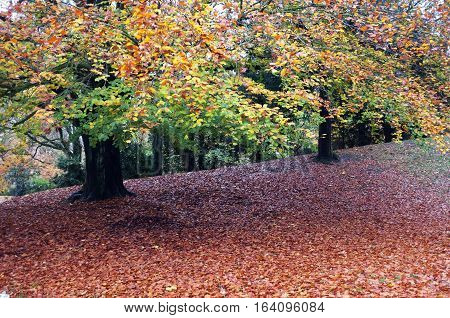 Fallen leaves under a tree during autumn