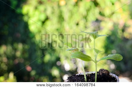 Green Plants growing in blurred nature background