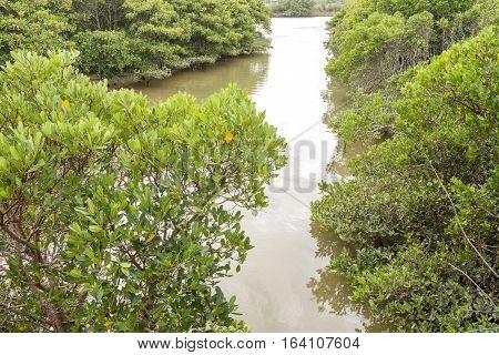 Gentle river between mangrove trees in Okinawa