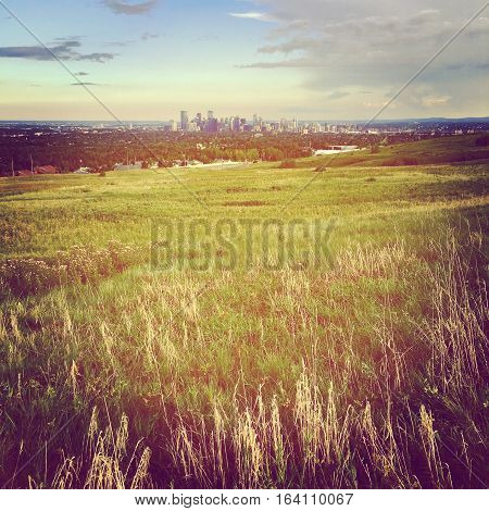 Field landscape with tall grass in foreground and downtown buildings,sunset and cloudy sky background. Tall wheat grass with trails in summer field.Lighting effects. Instagram effects.