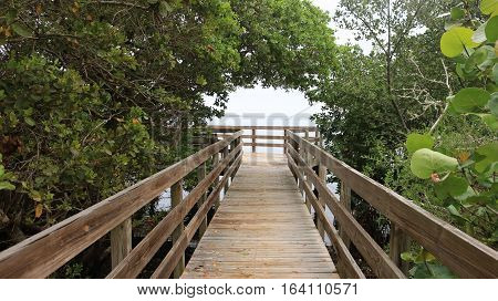 A walkway extends over a beautiful group of mangroves.