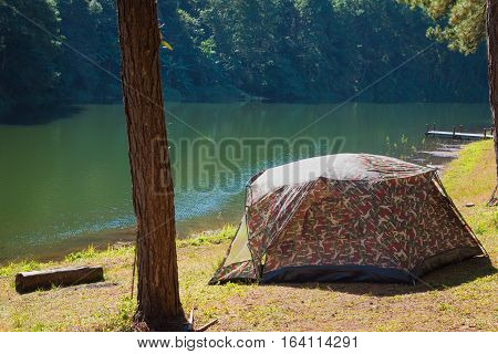 Camping And Tent Under The Pine Forest In Sunset At Pang-ung, Pine Forest Park