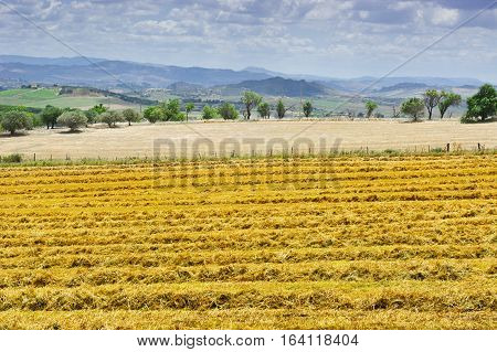 Mown Wheat Field on the Hills in Sicily