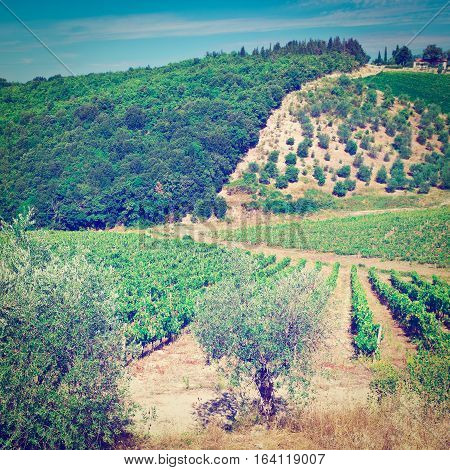 Hills of Tuscany with Vineyards and Olive Trees in the Chianti Region of Italy Instagram Effect
