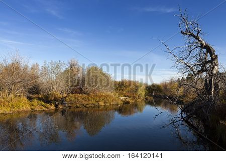 Taylor Creek, Lake Tahoe. Calm Reflective River And Tree With Blue Sky.