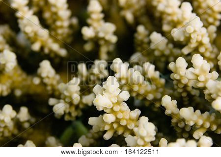 Table Coral Macro