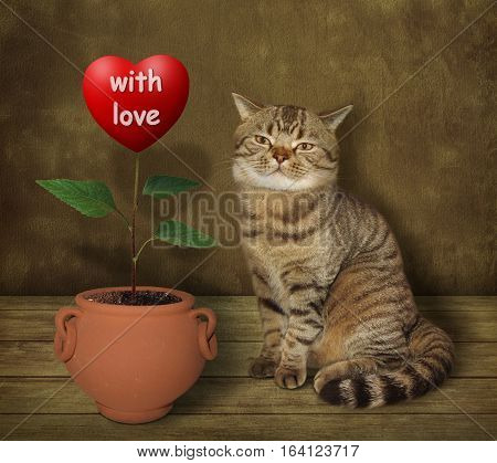 The cat grows flower. He is a real agronomist. The flower looks like a big red heart marked