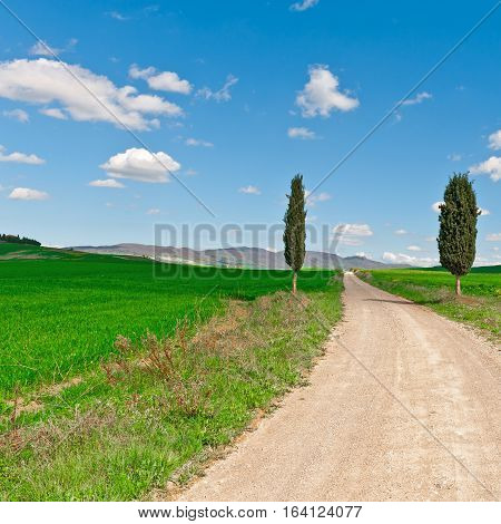 Dirt Road with Cypress Leading to the Farmhouse in Tuscany