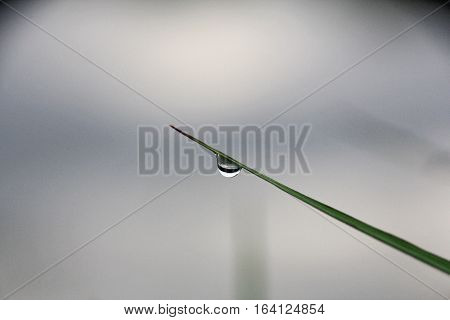 dewdrop round shape hangs on diagonal blade of grass