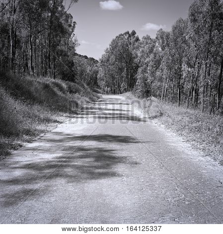 Asphalt Forest Road in Italy Retro Image Filtered Style