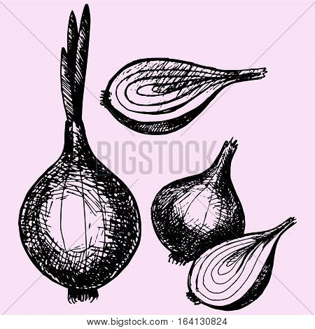 bulb onion with sprout, half onion doodle style sketch illustration hand drawn vector