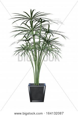 3D rendering of a palm tree in a pot isolated on white background