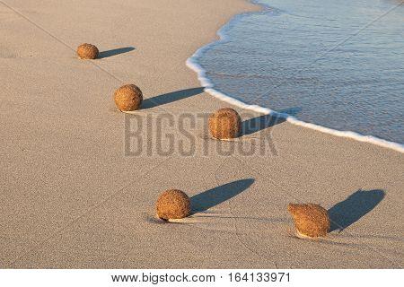 Neptune seaweed grass balls sitting on the beach