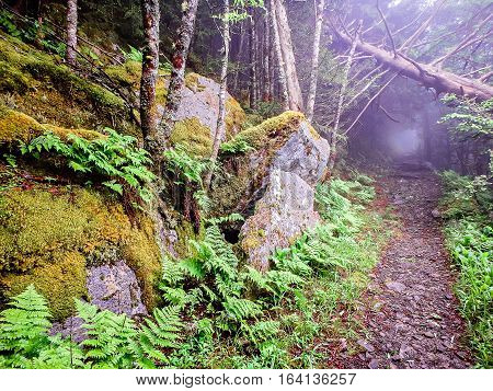 scenes along appalachian trail in great smoky mountains
