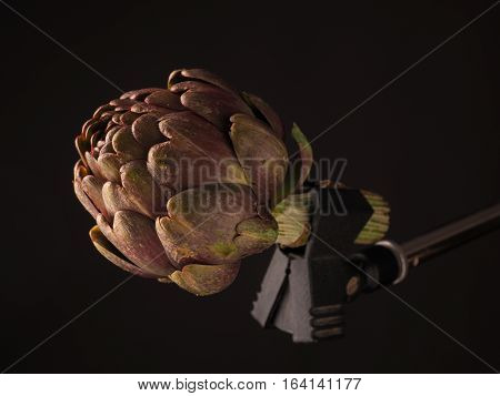Close up of an organic artichoke on a microphone stand in a dark studio