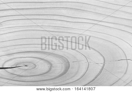 Wood Age Ring Background Texture Black and White