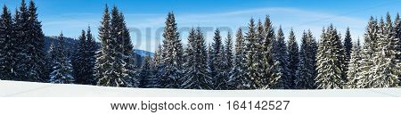 Winter fir tree forest covered with snow in mountains. Nature snow landscape background. Panorama. Long banner format for website.