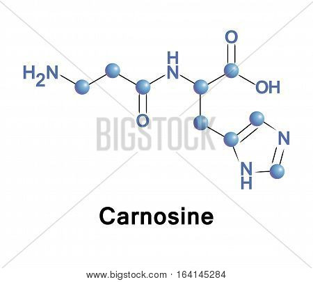 Carnosine, beta-alanyl-L-histidine, is a dipeptide molecule, made up of the amino acids beta-alanine and histidine. It is highly concentrated in muscle and brain tissues.